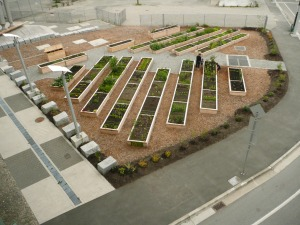 images above and below - False Creek Community Garden, located at the north end of the Cambie Street Bridge, immediately next door to the Neighbourhood Energy Utility (NEU) Garden